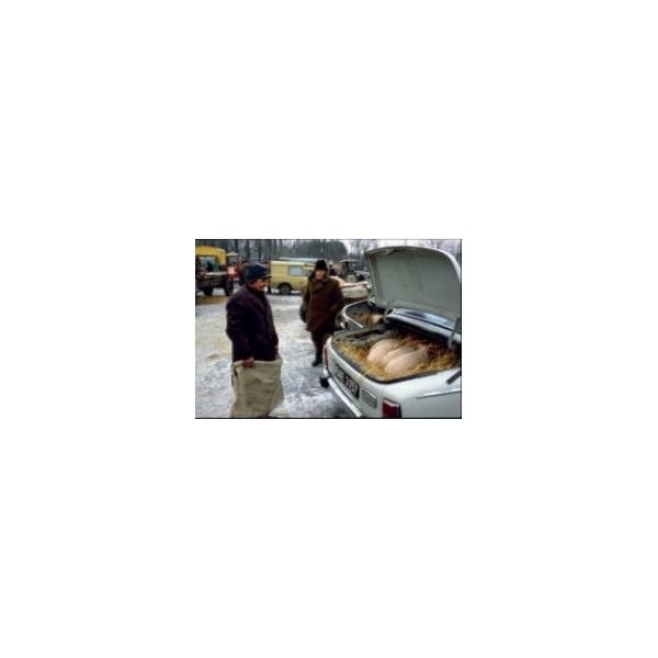 Żywe świnki na sprzedaż na targu w Grójcu